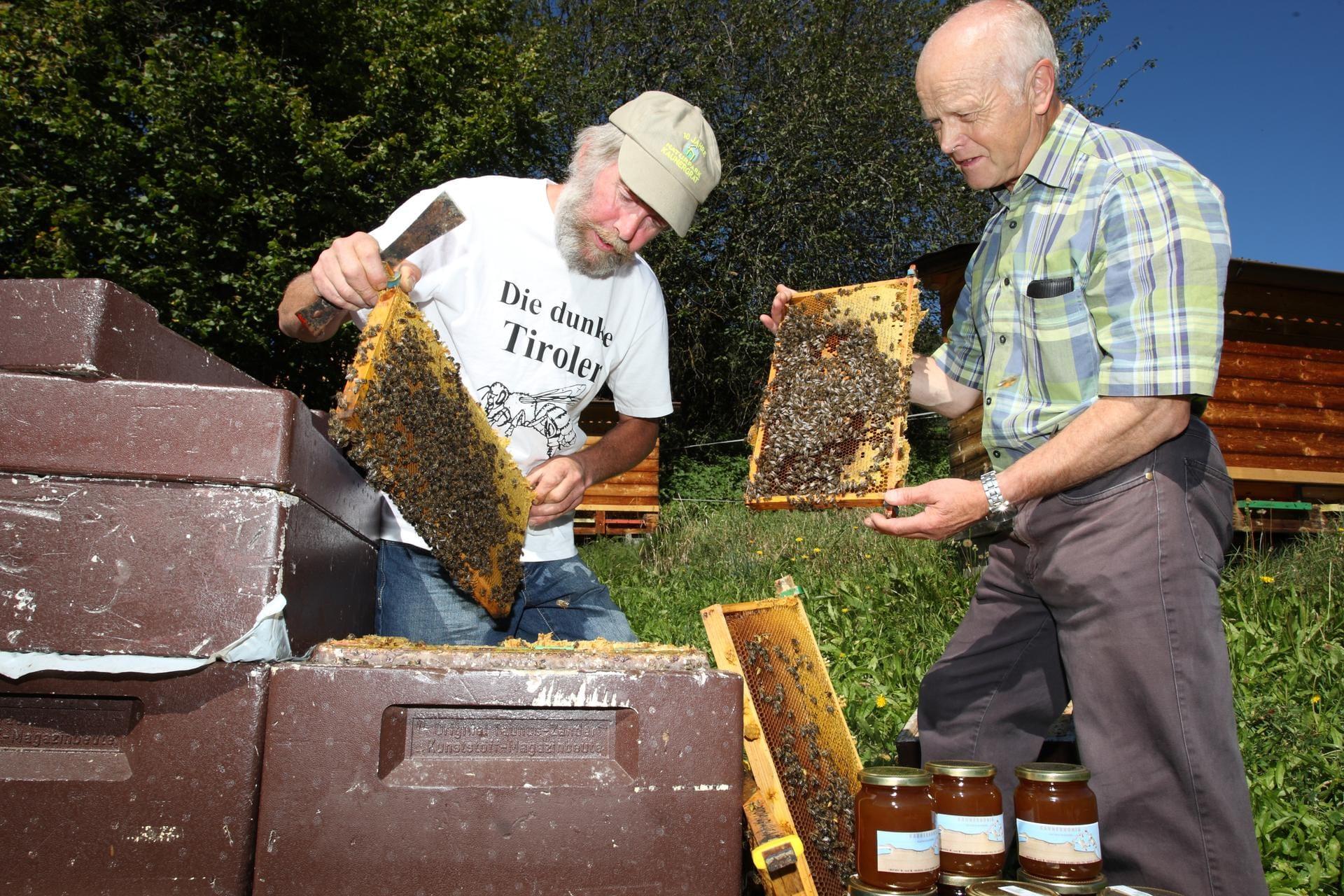 Bienen Partner braunelle bienenhonig naturpark kaunergrat